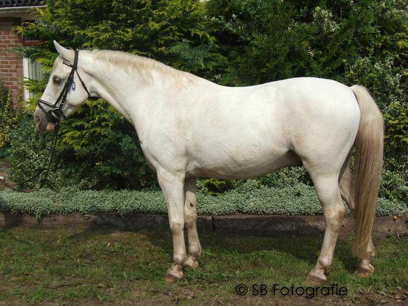 paard blinde darm